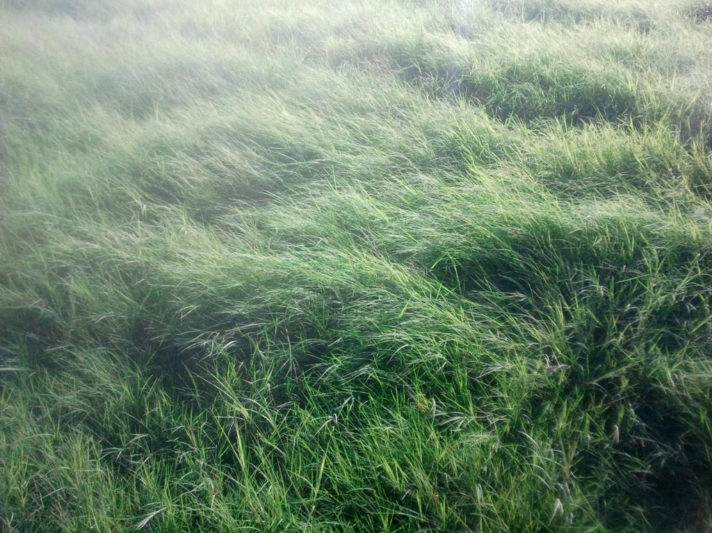 TX Bermuda Grass 6-2013