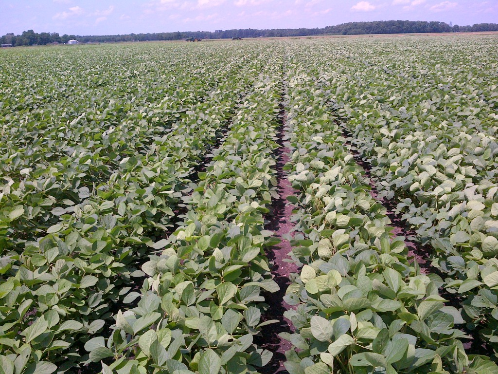 Twin row soybeans 95Y20 June 26,2013